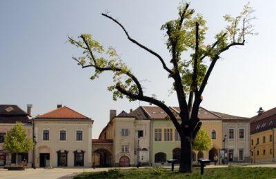 (cod 3137) Casa Elisabeta, Baia Mare