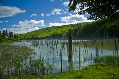 (cod 2763) Lacul Cuiejdel