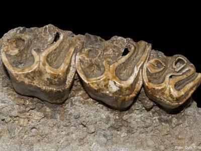 (cod 4914) Muzeul de Paleontologie și Stratigrafie