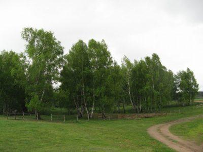 (cod 5219) Rezervaţia naturală Mestecănişul de la Reci