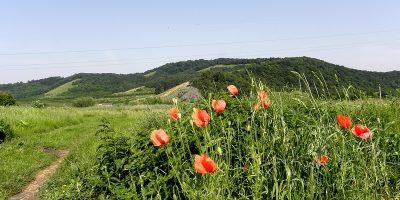 (cod 3430) Rezervația Mlaștina Hărman
