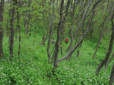 (cod 6612) Rezervația Naturală Vârful Secaru