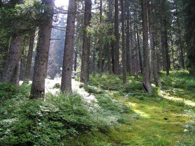 (cod 4276) Rezervația naturală Pădurea Verdele