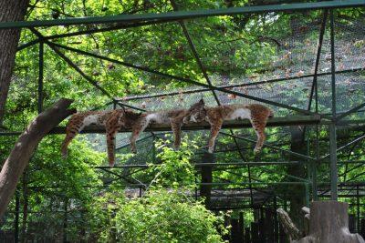 (cod 5931) Grădina Zoologică -Târgu Mureş
