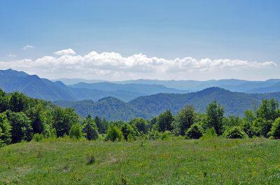 (cod 4255) Munții Vrancei