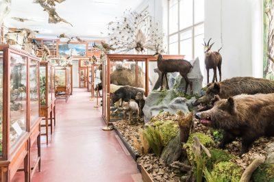 (cod 4919) Muzeul Zoologic