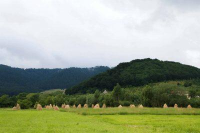 (cod 2802) Pădurea de Argint și Codrii de Aramă