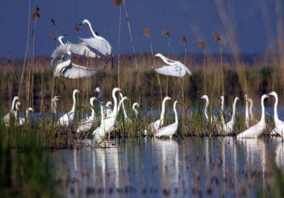 (cod 2513)   Parcul Natural Cefa