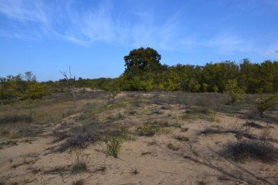 (cod 3947) Rezervaţia Naturală Hanul Conachi