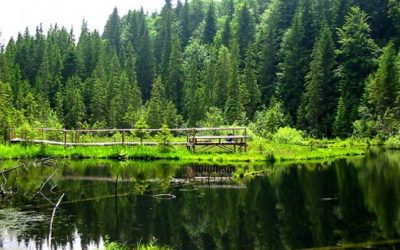 (cod 4270) Rezervația naturală Lacul Negru