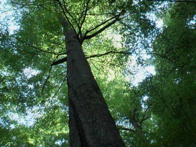 (cod 4271) Rezervația naturală Lepșa-Zboina