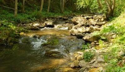 (COD 5417) Rezervația naturală Nemira