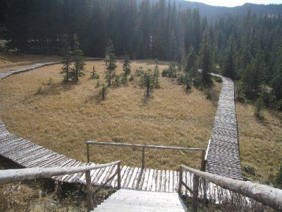 (cod 5357)  Rezervația naturală Turbăria Laptici